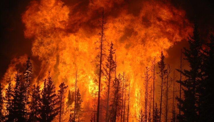 fire-forestwikimediacommonscameronstrandberg-scaled.jpeg